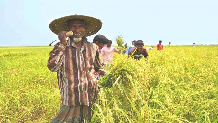 উৎপাদনশীলতা বাড়াতে 'জাতীয় উৎপাদনশীলতা দিবস' উদ্যাপন