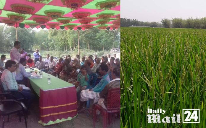 দিনাজপুর চিরিরবন্দরে ব্লাস্ট রোগ দমনে কাজ করছে কৃষি বিভাগ