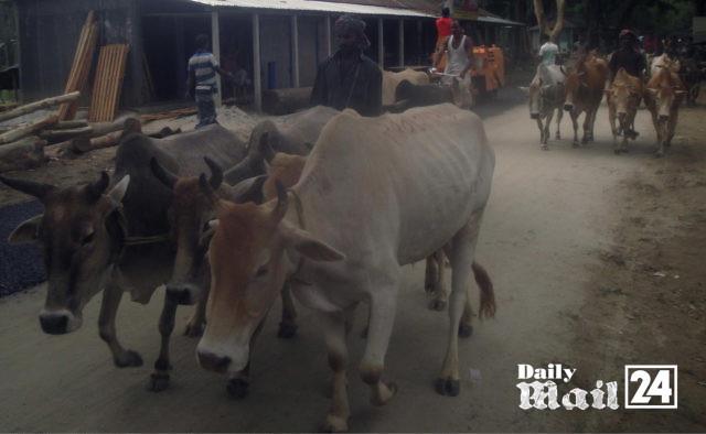 রৌমারী করিডোর বন্ধ থাকায় রাজস্ব হারাচ্ছে সরকার