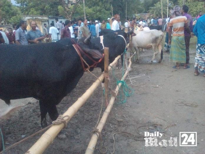 শ্যামনগরে কোরবাণির পশুর হাটে দেশি গরুর চাহিদা বেশি