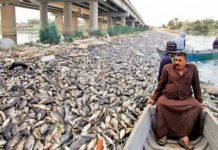 রহস্যজনক কারণে শত শত মাছ মরে ভেসে উঠছে ইরাকে